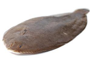 Whole Dover Soles